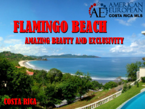 Flamingo beach exclusivity