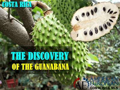 The discovery of Guanabana