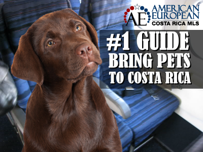 The #1 guide to bring your pets safely to Costa Rica