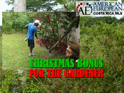 Christmas bonus for the gardener