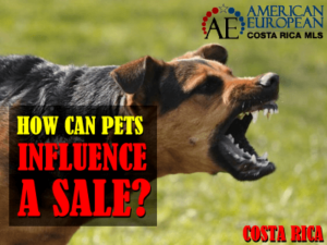 How pets can influence the sale of properties in Costa Rica