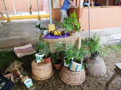 Herbs and plants from Atenas, Costa Rica