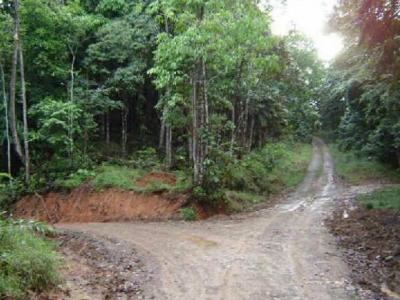 Invest in a reforestation farm in Costa Rica