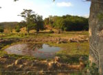 30 Acre Bagaces farm with secluded river frontage in Guanacaste