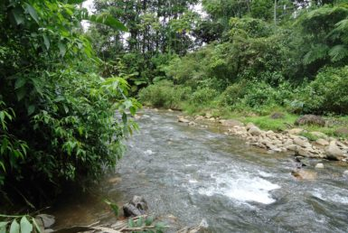 Guanacaste Rainforest property for sale