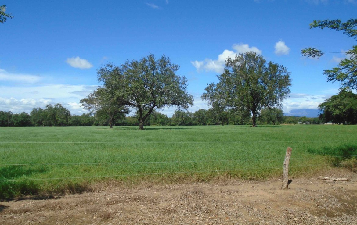 Working Wagyu Cattle Ranch for sale