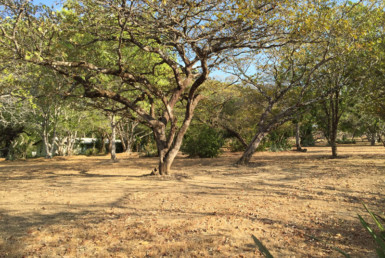 Large land plot for Sale in Cañas Dulces