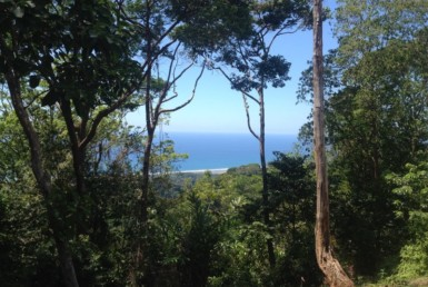 South Pacific 5 acre nature lover's property