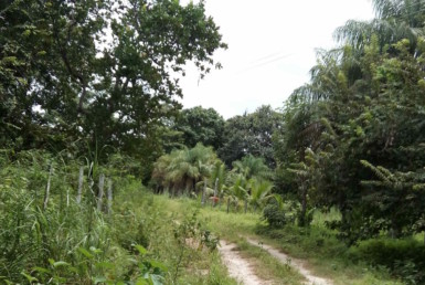 Beautiful Secluded Large Bagaces Building Lot