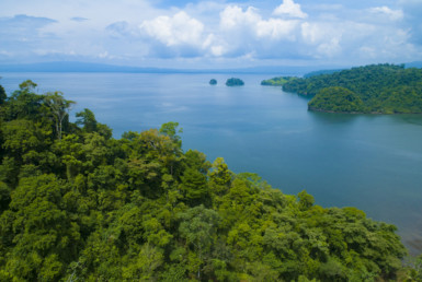 Fire Sale - 123 Acre Ideal for Preppers Primary Rainforest Waterfront financing available