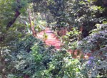 Atenas-Jungle-House-with-over-10-acres-land-to-develop-–-Rural-Nature-and-Stunning-Views-19