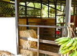 Atenas-Jungle-House-with-over-10-acres-land-to-develop-–-Rural-Nature-and-Stunning-Views-20