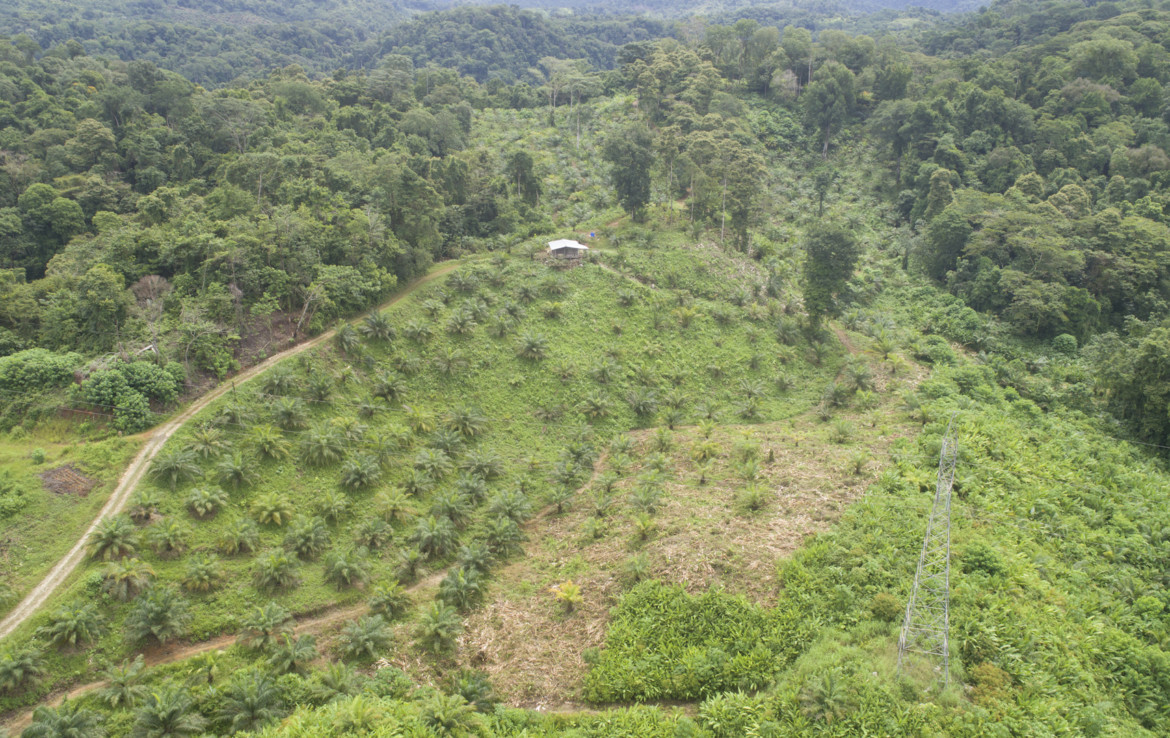 Price Reduced Osa Peninsula Palm oil producing 242 Acre farm