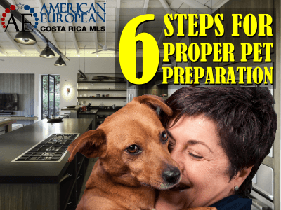 6 Steps for Proper Pet Travel Preparation before Flying