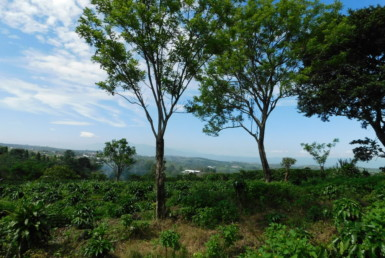 Small 2.5 Acre Grecia Coffee Farm