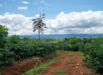 Perez Zeledon 561 Acre Coffee Farm and Other Crops