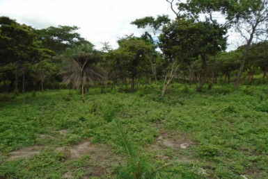 Incredible Price 50 Acre Bagaces Farm with River