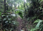Bargain Almost 6 acres of land in the Mountains of Sarchí