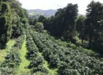 Self Sufficient Coffee Farm with 3 BR home in El Roble Naranjo