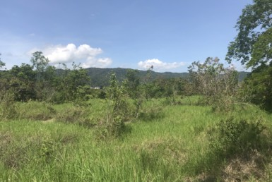 Over 3 Acres Slightly Sloping Ciudad Colon Residential Farm