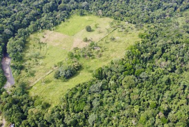 Cheap 135 Acres Osa Development Property Surrounded by Rainforest